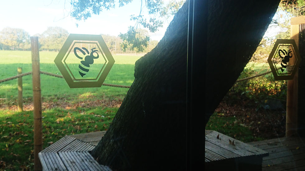 view of tree and grassy field through the hive back windows