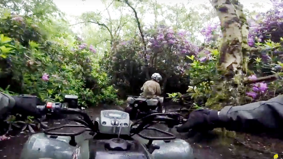 riding behind a quad in rhododendron woodland